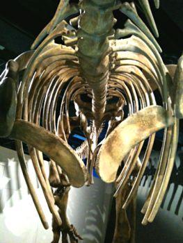 Prime rib (Photo by Tseen Khoo)