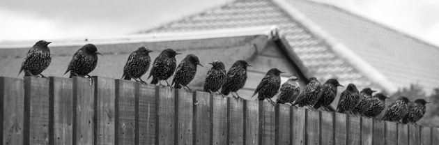 Breakfast queue by Ross Strahan | www.flickr.com/photos/ross_strachan | Shared via CC BY-NC-ND 2.0