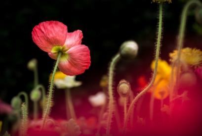 Photo by Wu Yi | unsplash.com