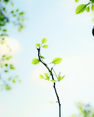 Photo by Ravi Roshan | unsplash.com